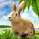 Rabbit Hunting Challenge : The Game by MARTIL Games
