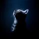 Black Cat Theme C Launcher by Best theme store