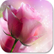 Pink Rose HD Wallpapers by HD Wallpaper Developers