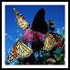 Butterflies - Live Wallpaper by Hojasoft, LLC