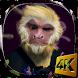 Dance Monkey 4K Live Wallpaper by Pawel Grabowski