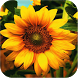 3D Sunflower by niebo smoka