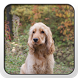 English Cocker Spaniel Theme by Fun Apps and Themes
