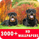 Rottweiler Live Wallpapers HD by HD Live Wallpaper & Prank App