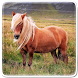 Pony Horse Live Wallpaper by Art LWP