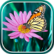 Butterfly live wallpaper by Live Wallpapers 3D