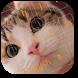 Funny Kitten Keyboard Theme by Designer Superman