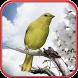 تربية طائر الكناري بدون انترنت