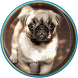 Cute Puppies Live Wallpaper by Brandon Apps