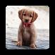 Puppy Backgrounds by AlVl.Dev