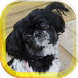Cute Puppies live wallpaper by AnastasiaApps