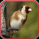 تربية طائر الحسون بدون انترنت by DrWo Apps