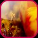 Blurred flowers Live Wallpaper by Bogdan Zuy