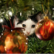 Advent Calendar Christmas Cats by galaticdroids