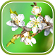 Spring Garden Live Wallpaper by Live Wallpapers 3D