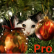 Advent Calendar Xmas Cats Pro by galaticdroids