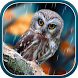 Autumn Live Wallpaper by BlackBird Wallpapers