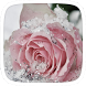 Pink Frozen Flower Theme by Theme Worlds