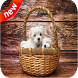 Cute Puppies Live Wallpaper 4k by Ustudio Live Wallpapers