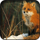 Fox Wallpapers by HAnna