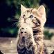 Cute Cat Theme C Launcher by Best theme store