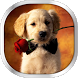 Dog Puppies Live Wallpaper by HQ Awesome Live Wallpaper
