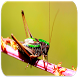 Crickets sounds by Apps Free Inc.