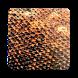 Komodo 11 Chess Engine by komodochess.com