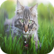 American Curl Cats Wallpapers by Laland Apps