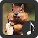 Chipmunk Sounds by Robino Apps
