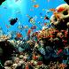 Aquarium Decoration VIDEOs by Karan Thakkar 202