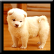 Cute Puppies Live Wallpaper by Jay´s Appsolution