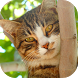 Cats Wallpaper <3 by MEB APP Inc.