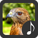 Hawk Sounds by Robino Apps