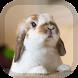Rabbit Wallpaper by PegasusWallpapers