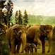 India´s Nature Live Wallpaper by Jay´s Appsolution