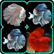 Ornamental Betta Fish by opsiapp