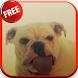 Dog Licking Screen HD LWP by CharlyK LWP