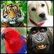 Animal Sounds Birds Sound by KidsFunGames