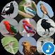 Appp.io - Australian Bird sounds by Appp.io