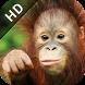 Go Sabah HD by Sabah Tourism Board