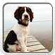 English Springer Spaniel Theme by Fun Apps and Themes