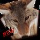 Smart Snow Wolf Theme by lovethemeteam