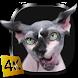 Sphynx Cat Live Wallpaper by Pawel Grabowski