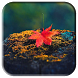 Autumn Live Wallpaper by Sukipli Studio