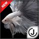 Betta Fish HD by Joojle