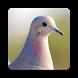 Pigeon Wallpaper HD by Laylali