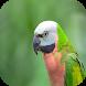 Budgies & Parakeets Breeding by Drjob Studio