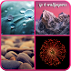 Phone-6 Live Wallpapers - HD by ***** Cosmic Inc