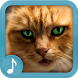 Meowing Cat Sounds by GoodRingtones